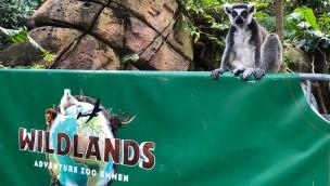 Stadt Emmen übernimmt 80 Millionen Euro Schulden von Wildlands Adventure Zoo