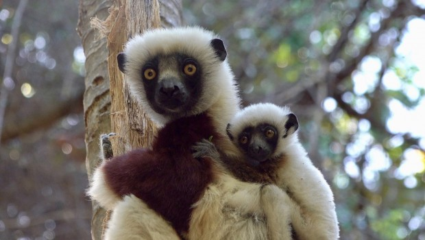 Zoo Rostock Rostocker Zooverein Madagaskar-Vortrag Frank-Roland Fließ
