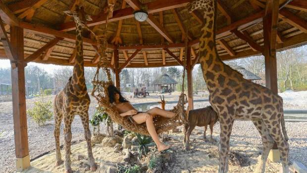 Jaderpark Rundbootfahrt Giraffen