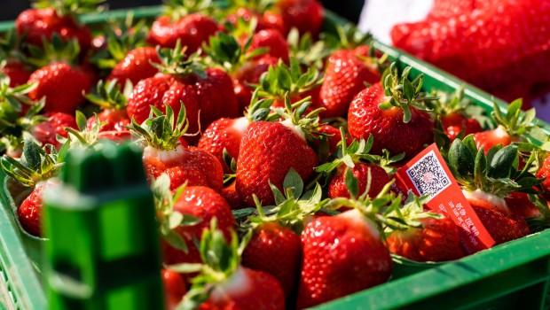 Karls Erdbeeren