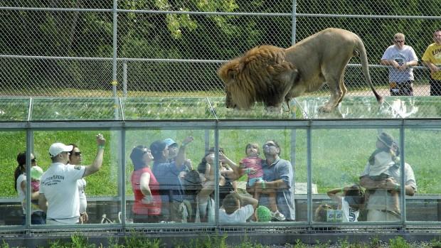 Parc Safari Löwen-Frühstück