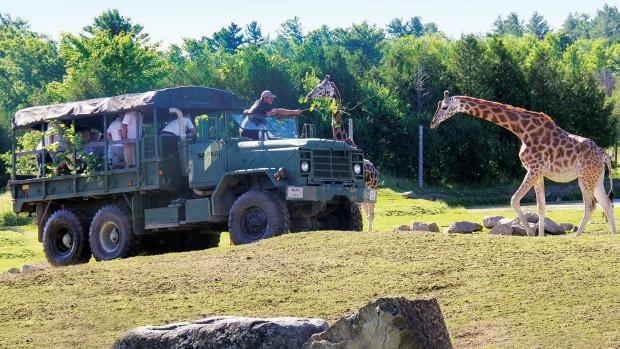 Parc Safari Auto-Safari mit Truck