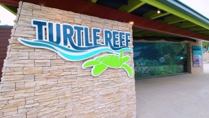 SeaWorld San Antonio Turtle Reef