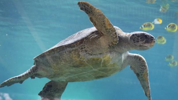 SeaWorld San Antonio Schildkröte
