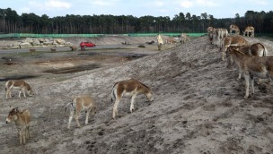 Nach Löwenangriff im Serengeti-Park: Verletzter Tierpfleger ist auf dem Weg zur Genesung