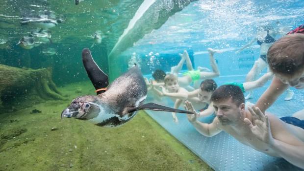 Spreewelten Lübbenau Pinguin Unterwasser