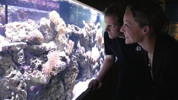 Zoo Osnabrück Aquarium Steinkorallen