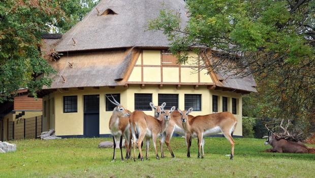 Zoo Rostock Huftieranlage