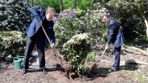 Zoo Rostock Rhododendronbusch gepflanzt