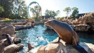 SeaWorld Orlando kündigt neue Achterbahn für 2020 an: Teaser-Video baut Spannung auf