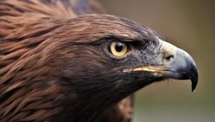 Tierpark Hellabrunn: Aktionswochenende Pfingsten 2019 zu Bergen, Wäldern und Wiesen