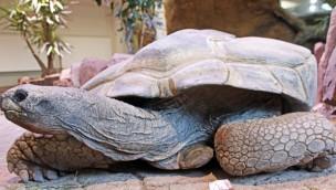 Zoologischer Stadtgarten Karlsruhe: Ältester Zoobewohner musste eingeschläfert werden