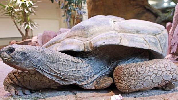 Zoo Karlsruhe Riesenschildkröte eingeschläfert