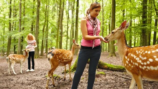 Erlebnispark Tripsdrill Wildparadies Fütterung