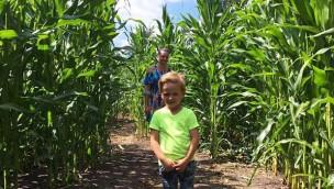 LandErlebnis Janßen macht Maislabyrinth wieder zugänglich: Temporäre Attraktion im Sommer 2019