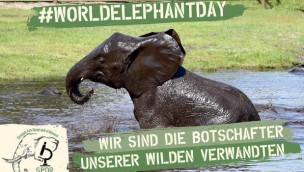 Serengeti-Park Welt-Elefanten-Tag 2019