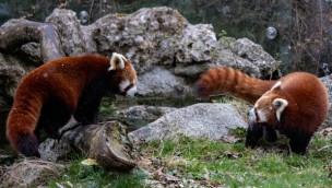 Tierpark Hellabrunn Miu und Shamina