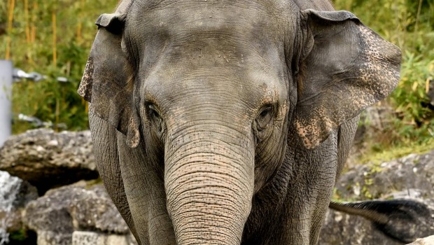 Tierpark Hellabrunn Elefant Temi