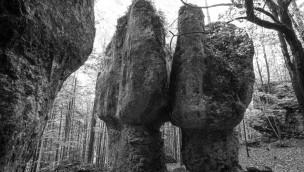 """Tierpark Hellabrunn zeigt Fotoausstellung """"Wildnis"""" von Norbert Rosing"""