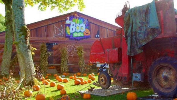 Paultons Park Halloween The Big Boo Barn