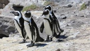 Pinguine Zoom Erlebniswelt