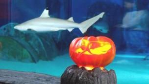 Halloween in SEA-LIFE-Aquarien? Darum gibt es kein Gruselfest für die Meeresbewohner!