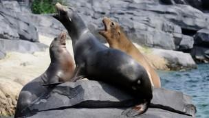wildlands-adventure-zoo-emmen-seeloewen