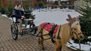 Tolli-Park Wintersaison 2019