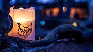 Wildpark Müden feiert im November 2019 Lichterfest mit vielen Attraktionen