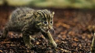 Fischkatzen in Hellabrunn mit dreifachem Nachwuchs Ende 2019