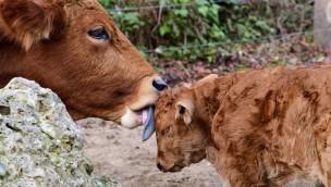 Tierpark Hellabrunn Ende 2019 mit Nachwuchs bei den Murnau-Werdenfelsern
