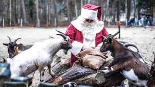 """Wildpark Müden feiert 2019 erstmals """"Tierische Weihnacht"""" mit Weihnachtsbaum-Verkauf"""