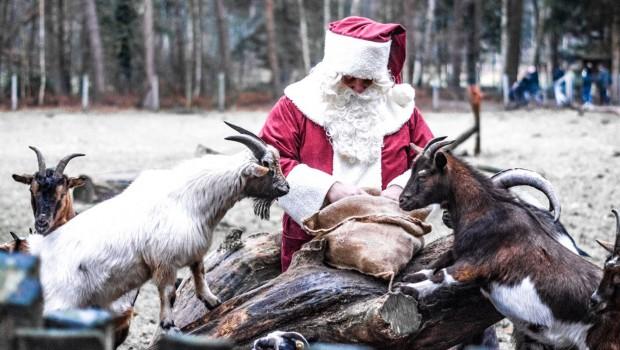 Wildpark Müden im Winter - Weihnachtsmann mit Ziegen