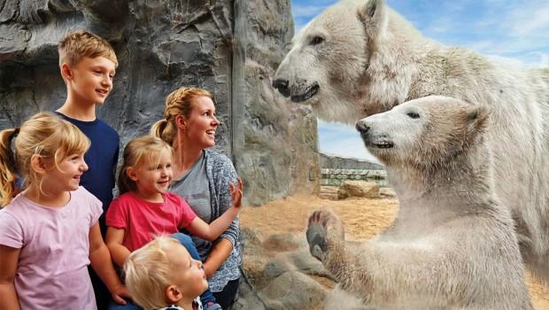 ZOOM Erlebniswelt Eisbären