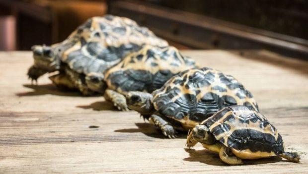 Erlebnis-Zoo Hannover Schildkröten Inventur