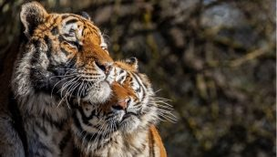 Tierpark Hellabrunn feiert Valentinstag 2020 mit Single-Führungen
