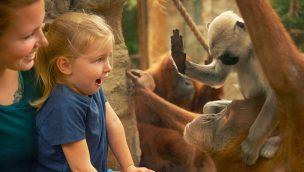 ZOOM Erlebniswelt Orang Utan Baby Besucher