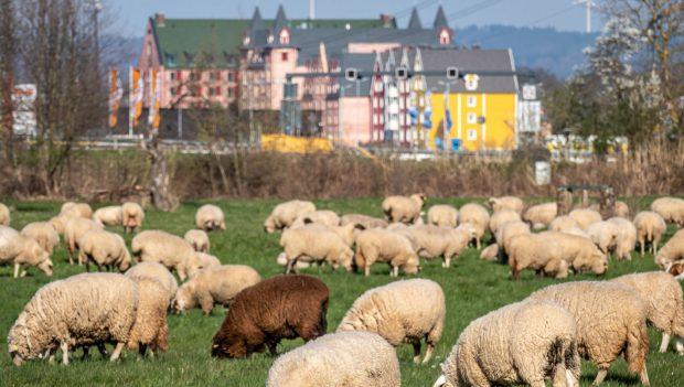 Europa-Park Schafherde vor Hotels