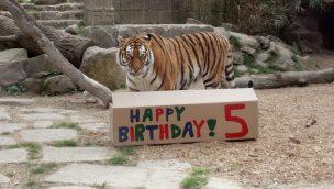 Erlebnis-Zoo Hannover Geburtstag Alexa