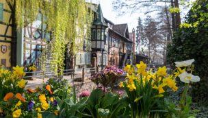 Tulpen und Narzissen blühen um die Wette: Frühlingserwachen 2020 im Europa-Park