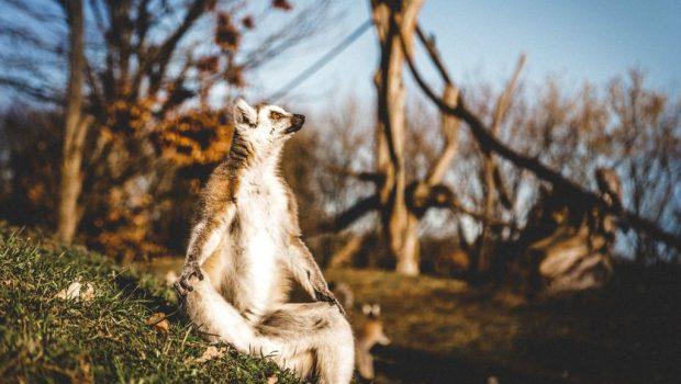 Tier- und Freizeitpark Thüle Katta